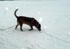 Sophie_snow_30909d