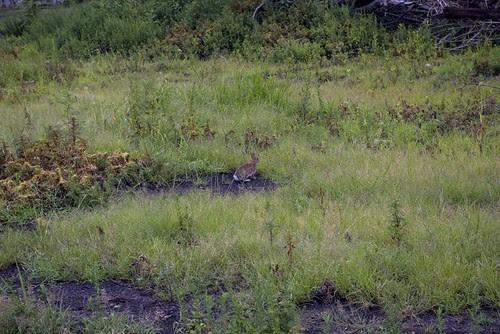 bunny one.jpg