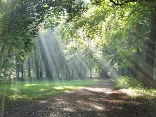 [Photo of sunlight shining on a forest path]
