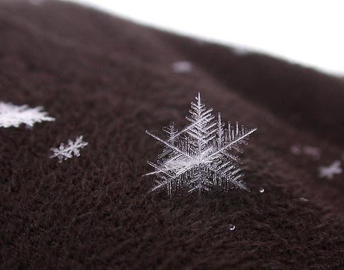 Snowflake on my jacket