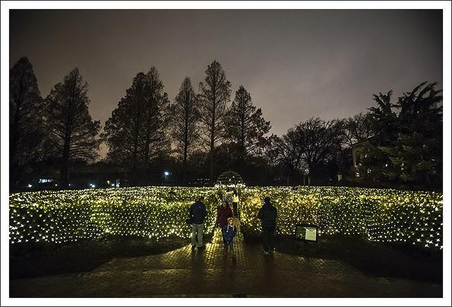 Garden Glow 2013-12-20 14