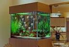 Home Decor Ideas Photo: Cool Aquarium Decorations Ideas, aquarium ...