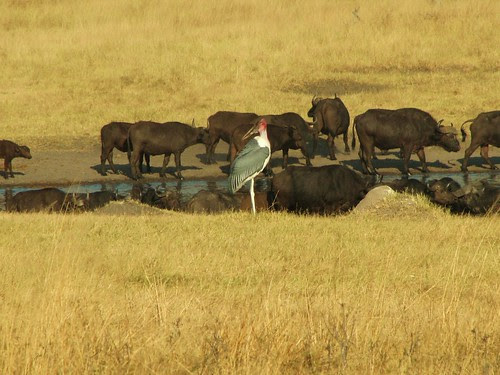 At the Waterhole by CharlesRay2010