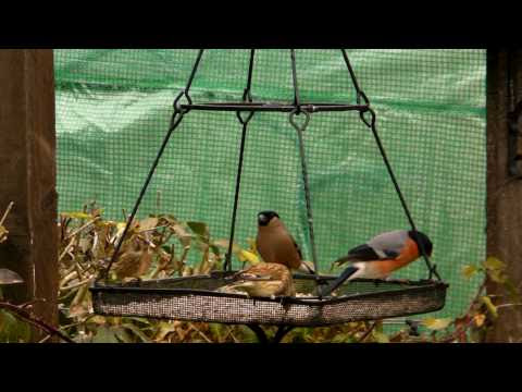 .com Filmed on 16th March 2010 Video Produced by Goldfinch Garden