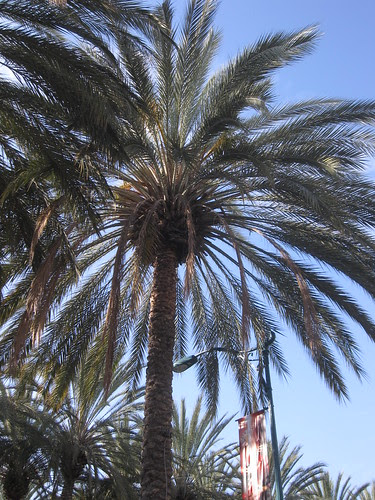CHA Day 4: Leaving Anaheim! 4