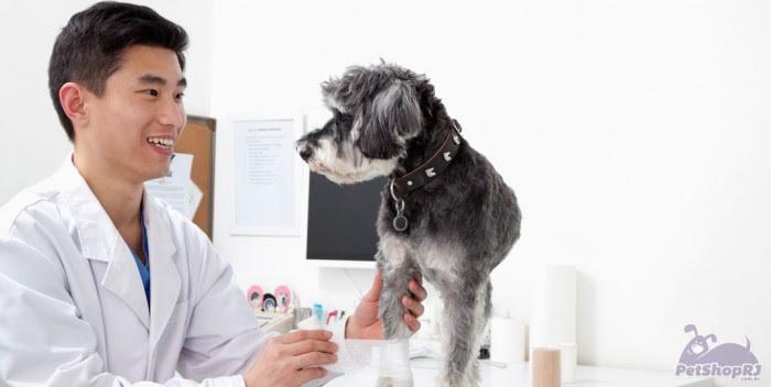 Quem recruta estagiário de Medicina Veterinária