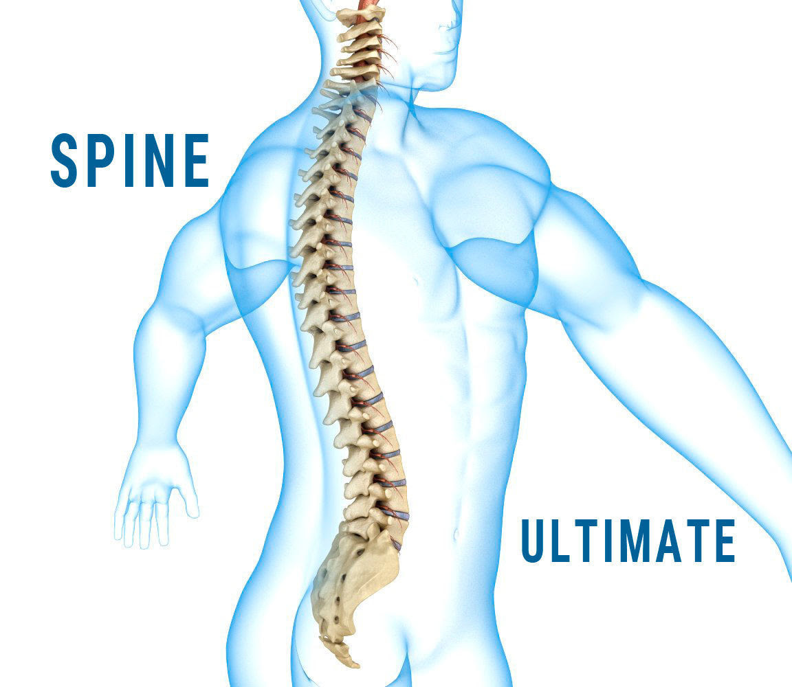 Check Out Your Amazing Spine | PureFIT Studios