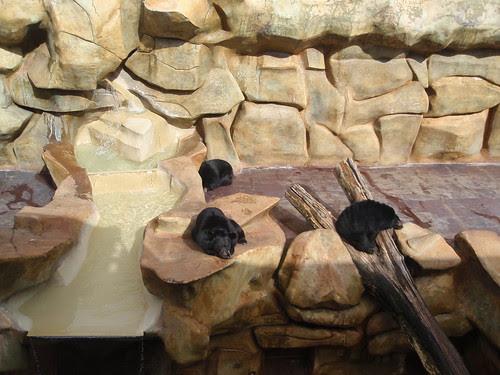 three of the bears