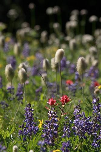 meadow-wildflowers