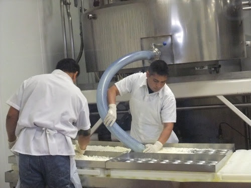 cheesemaking at Cowgirl