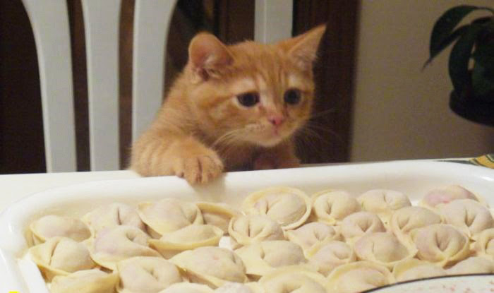 25 доказательств того, насколько коты многогранны и талантливы)))