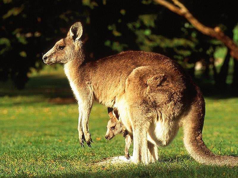 Картинки по запросу фото австралия животные