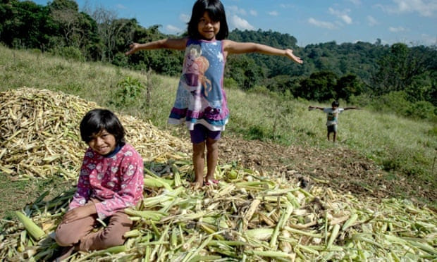 Brazil makes space for indigenous people with new reserve near São Paulo