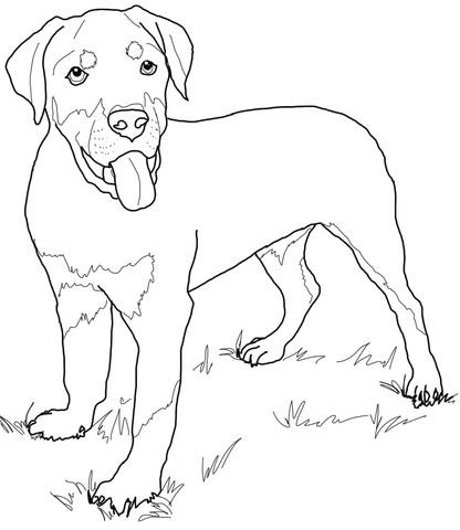 Dibujo De Cachorro De Rottweiler Para Colorear Dibujos Para
