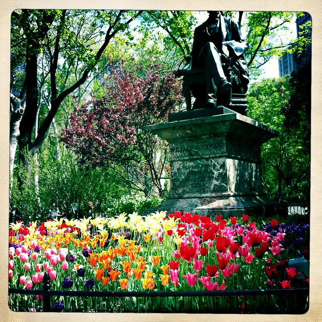 Madison Square Park, tulips