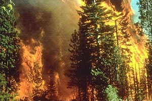 A daytime fire engulfing large trees