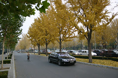 Autumn leaves Beijing