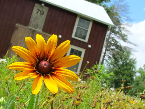 barn flower