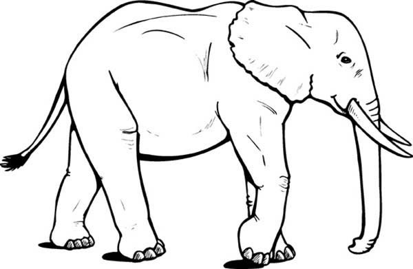 African Elephant Coloring Pages | Coloring Sky