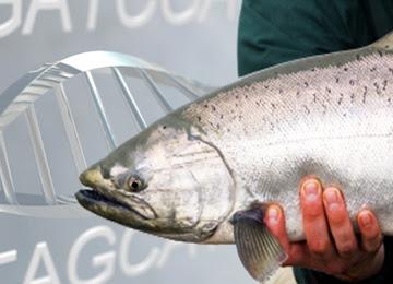 salmonfi