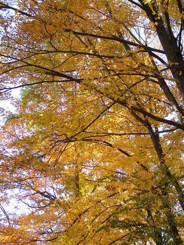 Fall Colors in Concord, MA