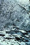 Winter - Snowy Stream