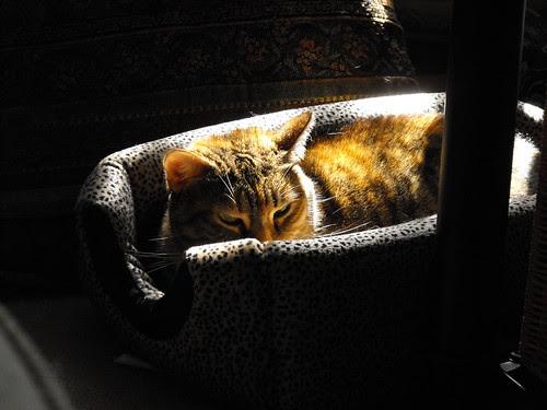 Sunshine on my Nina!