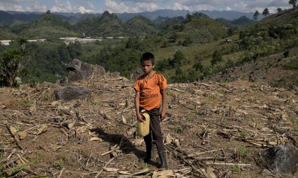 Un niño trabaja los cultivos cercanos a la hidroeléctrica Renace, en Cobán (Guatemala).