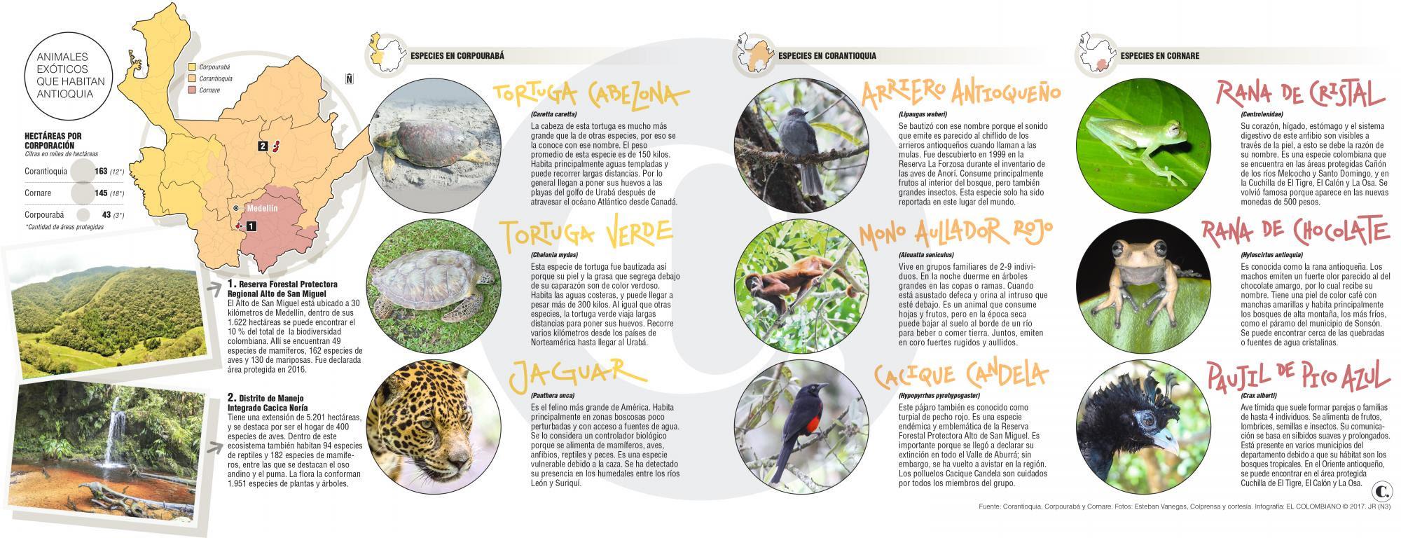 Plantas Y Animales Fantasticos Donde Encontrarlos En Antioquia