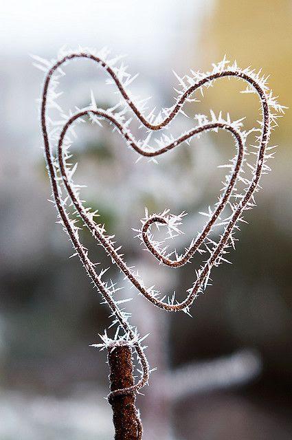 | December | Frosty heart