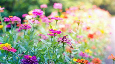 desktop wallpaper hd flowers landscape