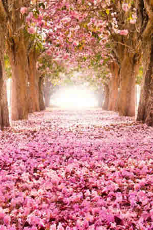 Imagenes De Flores De Amor