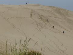 Sand dunes of the Cape Reinga