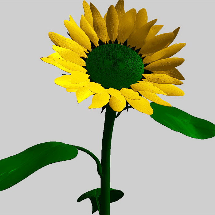 Common Sunflower 3d model Object files free download ...
