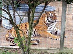 TigerWorld_52309_GOODc