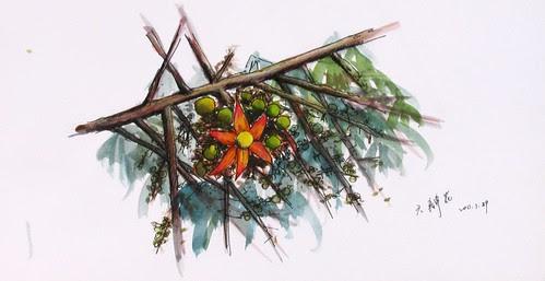 枋山愛文芒果的六瓣花