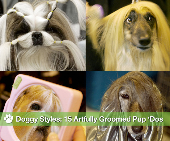 O Dog Hairstyle: Dog Hairstyles Daily Images Hotspot