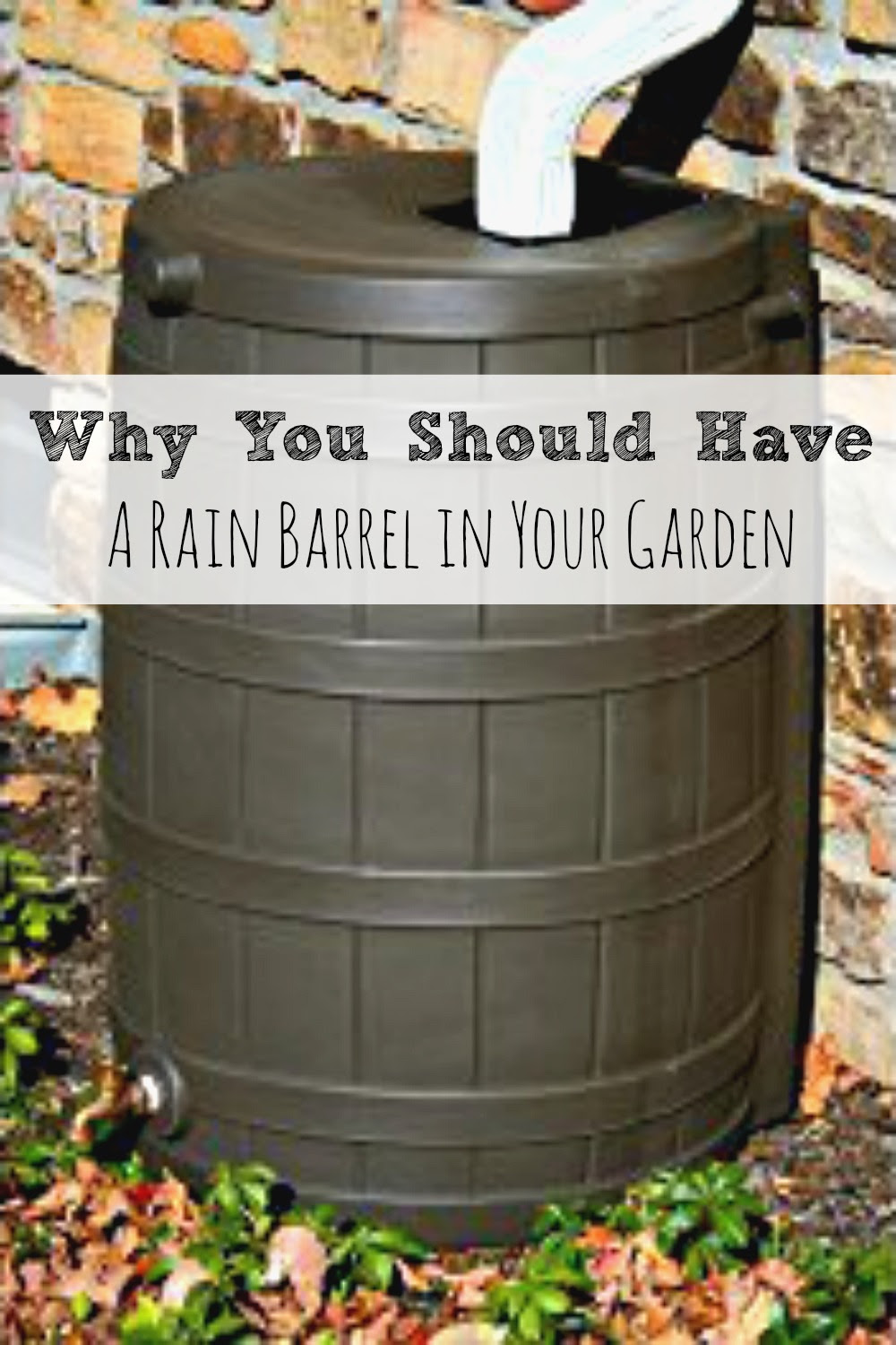 Why-You-Should-Have-a-Rain-Barrel-in-Your-Garden - HMLP # 36 Feature