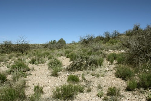 Desert around Montezuma Well