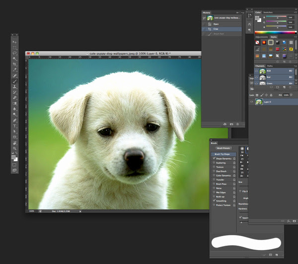 Just did this quick sketch of a puppy in photoshop.