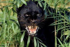 como-evitar-la-extincion-de-los-animales1