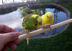 Birds_9510e