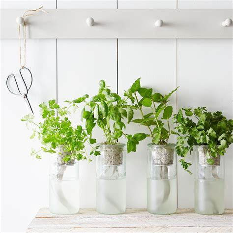 Eco Planter Herb Kit on Food52