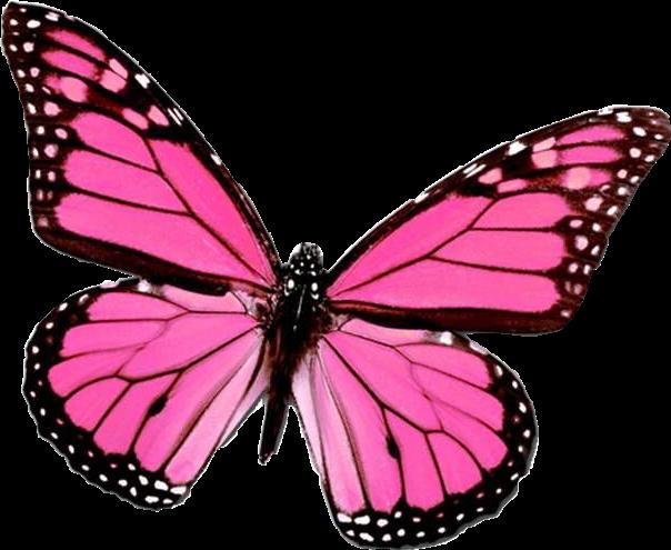 pink butterfly pinkbutterfly aesthetic vsco freetoedit...