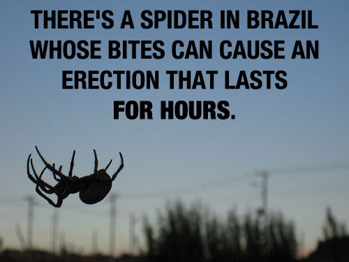 Fact about Spider