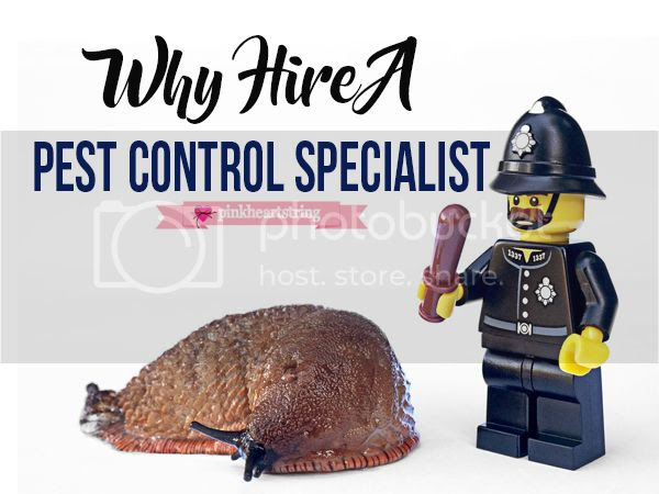 Why Hire A Pest Control Specialistg