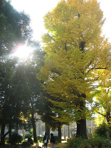 Tree at Ueno Park