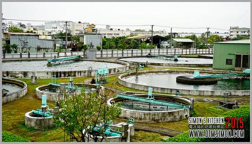 台灣綠藻12.jpg
