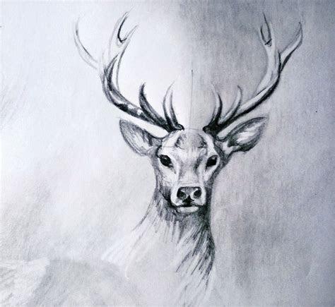 deer drawing   lineke lijn  deviantart