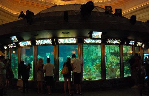 Shedd Caribbean Reef